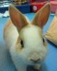 我的可愛小兔!