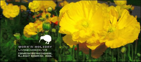 黃色罌粟花